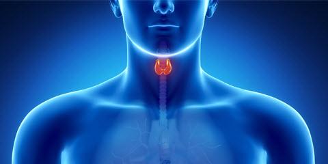 pajzsmirigy - hormonvizsgálat